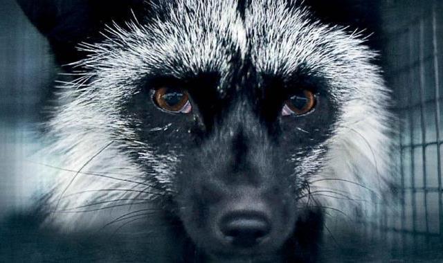 Inside Fur